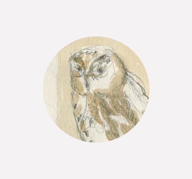 Croquis – Museo di Storia Naturale del Mediterraneo